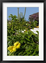 Framed Yellow Flowers, Cacti and Home, Aruba, Caribbean