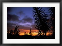 Framed Dunedin, South Island, New Zealand, Trees and sunset