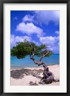 Framed Lone Divi Tree, Aruba, Caribbean