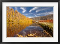 Framed Poplar tree, irrigation, Otago, South Island, New Zealand