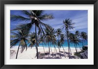 Framed Palm Trees on St Philip, Barbados, Caribbean