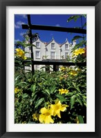Framed Yellow flowers, St Nicholas Abbey, St Peter Parish, Barbados, Caribbean