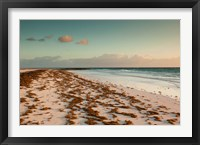 Framed Bahamas, Eleuthera, Harbor Island, Pink Sand Beach with seaweed