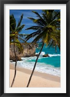 Framed Palm trees, Bottom Bay, Barbados, West Indies