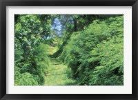 Framed View of Path Through Trees, Bermuda, Caribbean