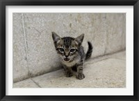 Framed Cute kitten on the streets of Old Havana, Havana, Cuba
