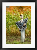 Framed New York, Cooperstown, Farmers Museum Fall cornfield with scarecrow