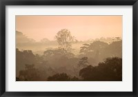 Framed Mist over Canopy, Amazon, Ecuador