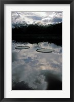 Framed Giant Water Lilies, Amazon River Basin, Peru