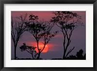 Framed Amazonia Sunset