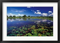 Framed Waterways in Pantanal, Brazil