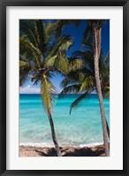 Framed Cuba, Matanzas Province, Varadero, Varadero Beach palms