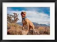 Framed Pitt Bull Terrier dog