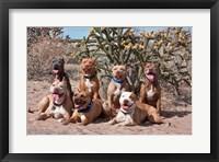 Framed American Pitt Bull Terrier dogs, cactus