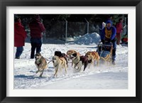 Framed Sled Dog Team, New Hampshire, USA