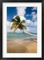 Framed Coconut Grove Beach, Cades Bay, St Kitts, Caribbean