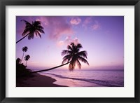 Framed Palm Trees at Sunset, Coconut Grove Beach at Cade's Bay, Nevis, Caribbean
