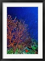 Framed Underwater, Bonaire, Netherlands Antilles
