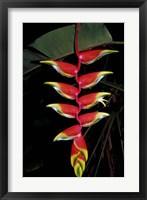 Framed Tropical Flower on Culebra Island, Puerto Rico