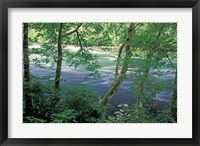 Framed Trees and Ferns on Banks of Campbell River, Vancouver Island, British Columbia