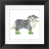Framed Shaggy Dog I