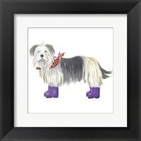 Shaggy Dog II Framed Print
