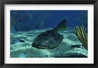 Framed Drepanaspis on the bottom of a shallow Devonian sea