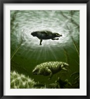Framed Scutosaurus karpinskii in prehistoric waters