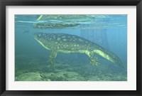 Framed Late Devonian Period Ichthyostega submerged in a floodplain