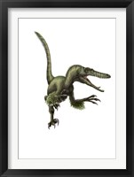 Framed Velociraptor, white background