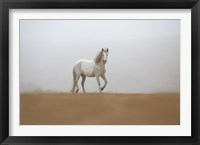 Framed White Stallion