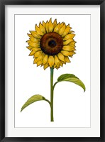 Framed Floral Sunflower