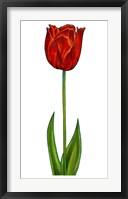Framed Floral Tulip