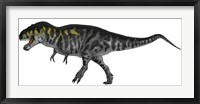 Framed Tyrannosaurus Rex, a Large Predator of the Cretaceous Period