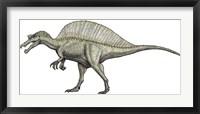 Framed Albino Spinosaurus