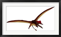Framed Darwinopterus, a Pterosaur from the Jurassic Period