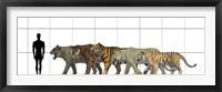 Framed Big Felines Size Chart