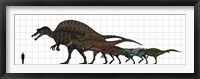 Framed Spinosauridae Size chart
