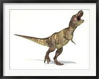 Framed Tyrannosaurus Rex Dinosaur on White Background