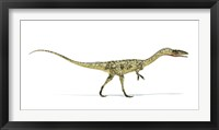 Framed Coelophysis Dinosaur on White Background