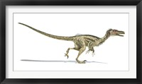 Framed Velociraptor Dinosaur on White Background