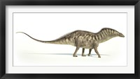Framed Amargasaurus Dinosaur on White Background