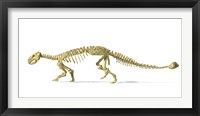 3D Rendering of an Ankylosaurus Dinosaur Skeleton Framed Print