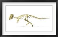 Framed 3D Rendering of a Pachycephalosaurus Dinosaur Skeleton