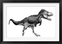 Framed Black Ink Drawing of Albertosaurus Sarcophagus