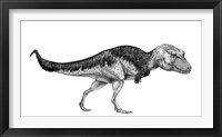 Black Ink Drawing of Lythronax Argestes Framed Print