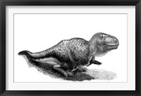 Framed Black Ink Drawing of Tarbosaurus Bataar