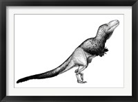 Black Ink Drawing of Daspletosaurus Torosus Framed Print