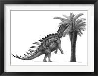 Framed Pencil Drawing of Miragaia Longicollum Feeding on a Cycad Tree