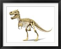 Framed 3D Rendering of a Tyrannosaurus Rex Dinosaur Skeleton